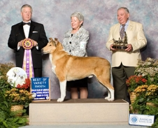 BISS Ch Kings Valley Demuir Here I Am, call name Cameron, is named Best of Variety Smooth at the Collie Club of America National Specialty Show.
