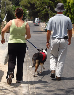 Alzheimer's Aid dog Keshet, from Kings Valley After All, is in training with partner Miriam.