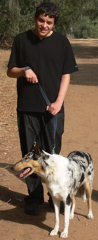 Spot, offspring of Kings Valley Collies Freckle, helps her autistic partner.