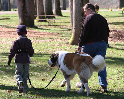 Saints for Safety, Security and Serenity trained Saint Bernard Penny to help an autistic boy, Nathan. Here, she walks with Nathan and mom Tammy through the park.