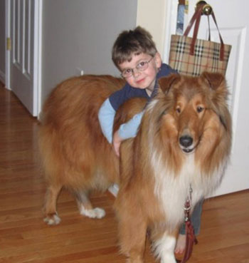 Barry, a collie who partners with an autistic child as a support dog, offers support to his partner Michael.