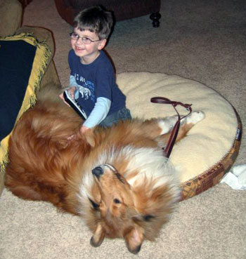 Barry, a collie who partners with an autistic child as a support dog, plays with his partner Michael.