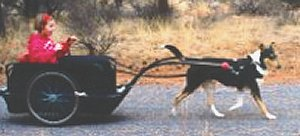 A collie pulls a cart with a young child.