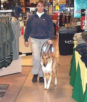 Guide dog Sailor leads his handler through a department store.