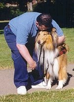 Collies for mobility and support can help with all kinds of needs.