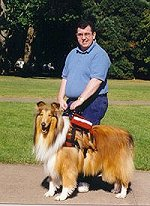 An assistance collie helps a man get around more easily.