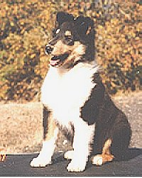 Kings Valley service dog Cole as a puppy.