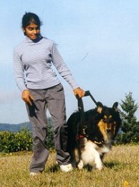 Kings Valley Collies mobility dog Silly helps his partner Meghla.