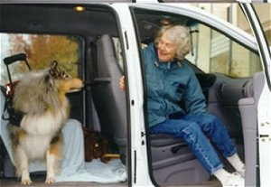 Kings Valley Collies mobility dog Sera gets in and out of a van.