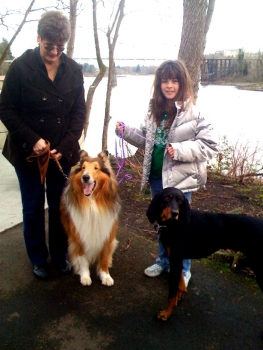 Kings Valley Collies dog Brady in his retirement family.