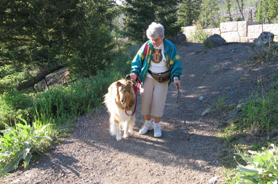 Kings Valley collie for mobility Stasha assists her human partner, Shiela, through Yellowstone Park.