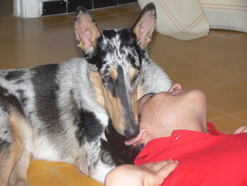 Spot, offspring of Kings Valley Collies Freckle, gives her autistic partner, Eran, more stability and fun.
