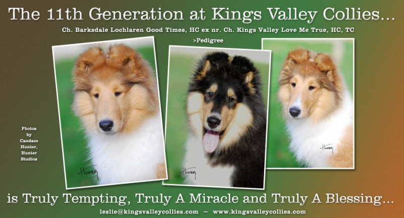 Collies Online ad from March 2010 for Truly Tempting, Truly a Miracle and Truly a Blessing, the 11 generation at Kings Valley Collies.