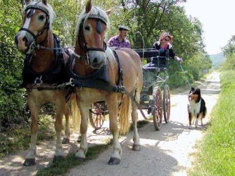The Coach Dog test.
