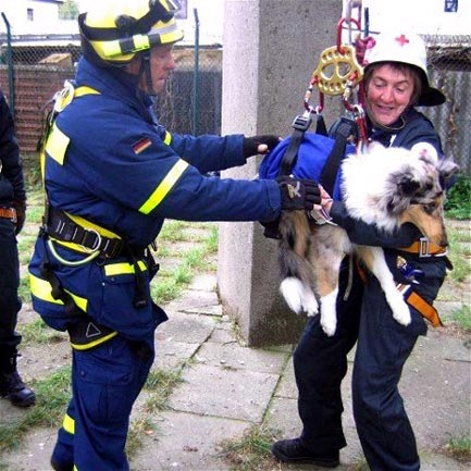 Collies in Germany participate in a practice session for a Medical Search & Rescue Team.