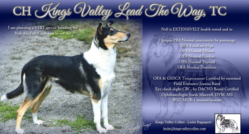 Kings Valley Collies Sire Nell