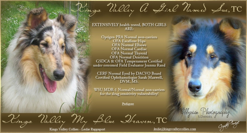 Kings Valley Collie a girl named Sue and My Blue Heaven