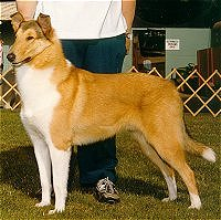 Kings Valley Collies sire Baxter.