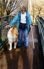 Mobility collies help their handlers through many kinds of environments.
