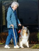 Kings Valley Collies mobility dog Sera.