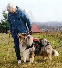 Kings Valley Collies mobility dog Sera helps his partner Cindy go for walks.